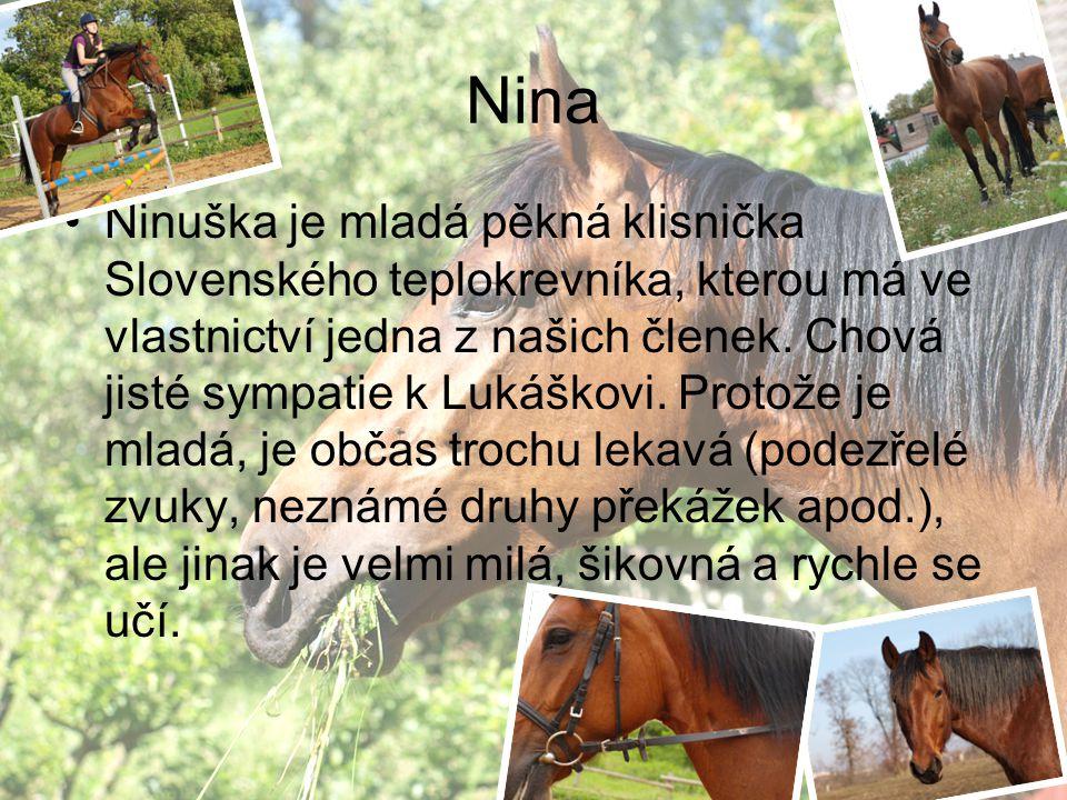 Nina Ninuška je mladá pěkná klisnička Slovenského teplokrevníka, kterou má ve vlastnictví jedna z našich členek. Chová jisté sympatie k Lukáškovi. Pro