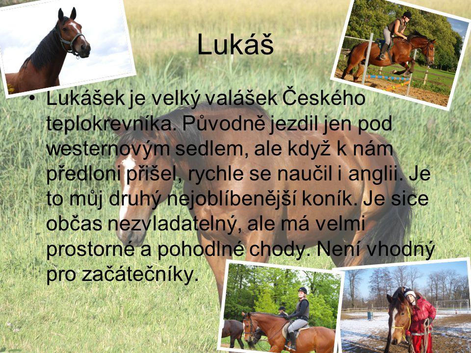 Lukáš Lukášek je velký valášek Českého teplokrevníka.