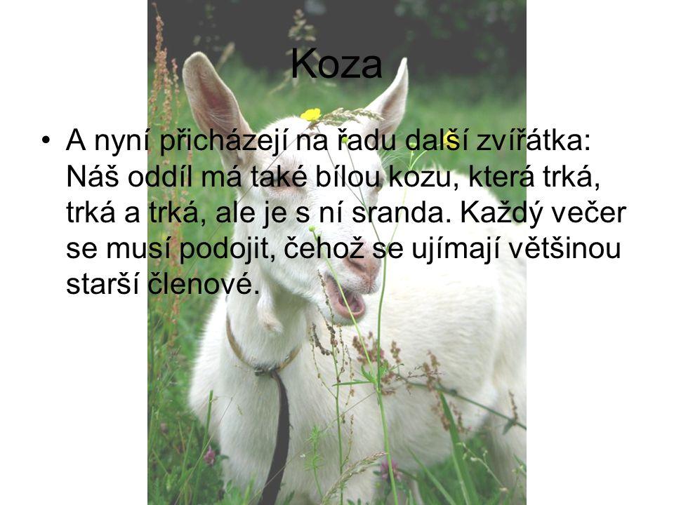 Koza A nyní přicházejí na řadu další zvířátka: Náš oddíl má také bílou kozu, která trká, trká a trká, ale je s ní sranda. Každý večer se musí podojit,
