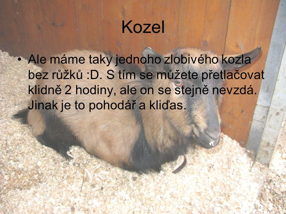 Kozel Ale máme taky jednoho zlobivého kozla bez růžků :D. S tím se můžete přetlačovat klidně 2 hodiny, ale on se stejně nevzdá. Jinak je to pohodář a