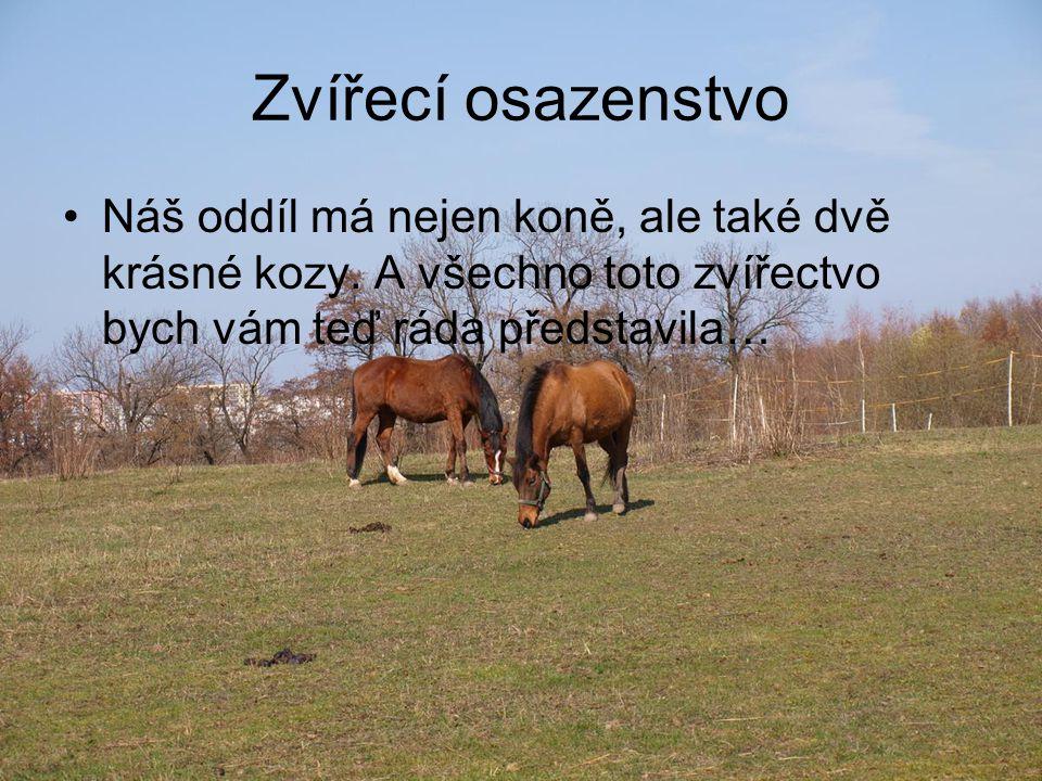 Zvířecí osazenstvo Náš oddíl má nejen koně, ale také dvě krásné kozy. A všechno toto zvířectvo bych vám teď ráda představila…