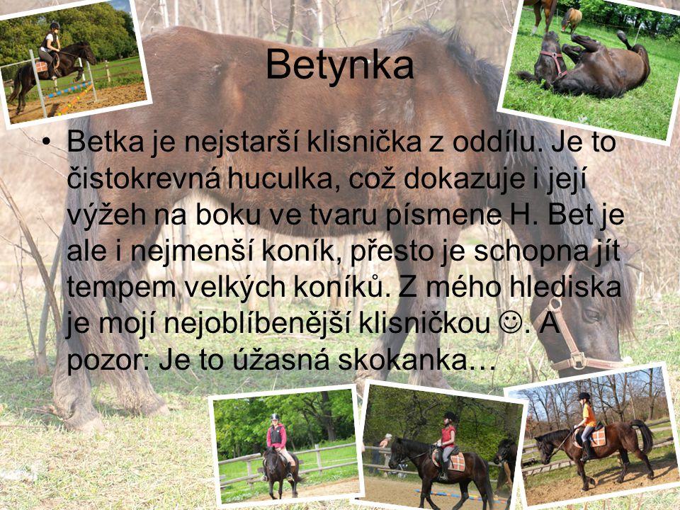 Betynka Betka je nejstarší klisnička z oddílu.