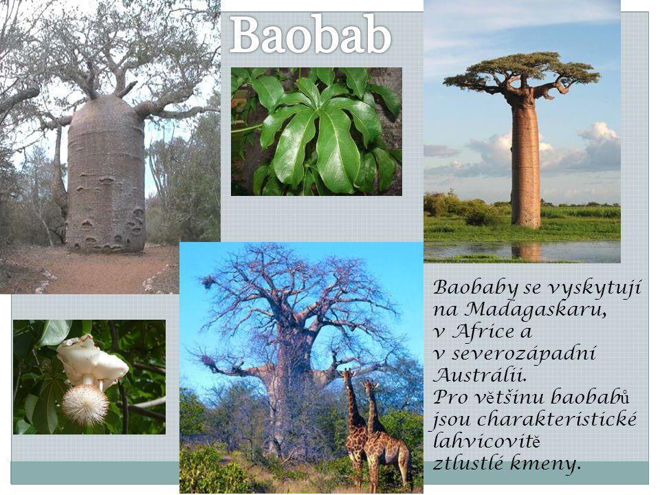 Baobaby se vyskytují na Madagaskaru, v Africe a v severozápadní Austrálii. Pro v ě tšinu baobab ů jsou charakteristické lahvicovit ě ztlustlé kmeny.