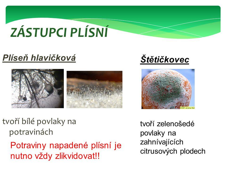 Plíseň hlavičková tvoří bílé povlaky na potravinách ZÁSTUPCI PLÍSNÍ Štětičkovec tvoří zelenošedé povlaky na zahnívajících citrusových plodech Potravin