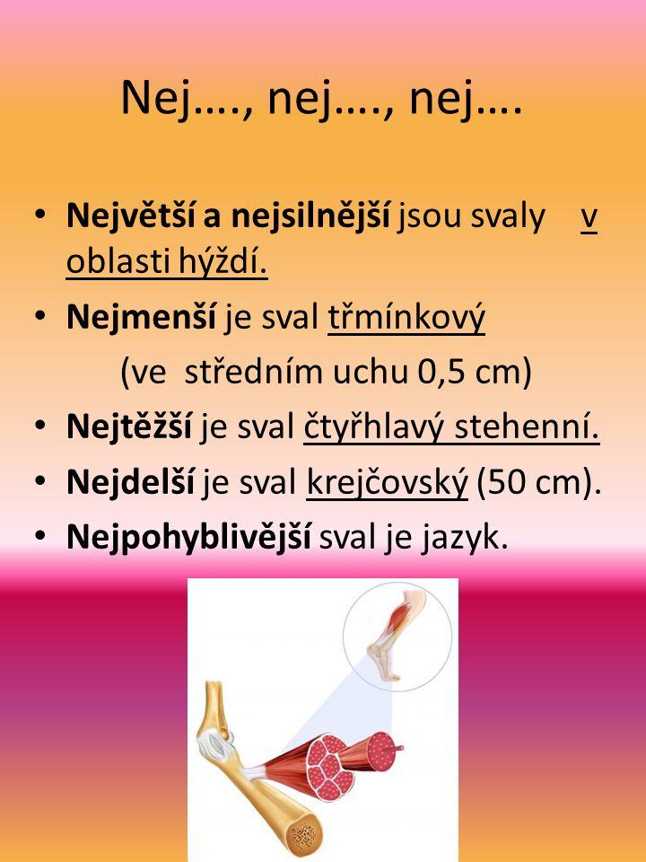 Nej…., nej…., nej…. Největší a nejsilnější jsou svaly v oblasti hýždí. Nejmenší je sval třmínkový (ve středním uchu 0,5 cm) Nejtěžší je sval čtyřhlavý