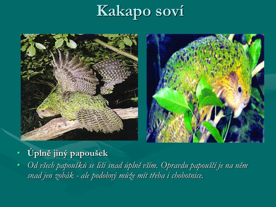 Kakapo soví Úplně jiný papoušekÚplně jiný papoušek Od všech papoušků se liší snad úplně vším.