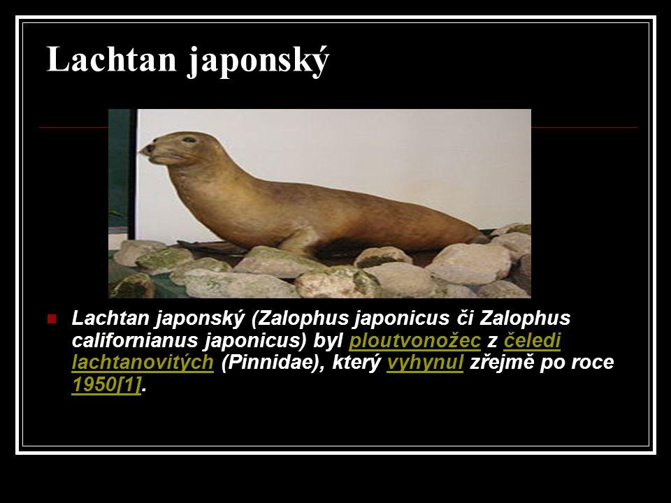 Lachtan japonský Lachtan japonský (Zalophus japonicus či Zalophus californianus japonicus) byl ploutvonožec z čeledi lachtanovitých (Pinnidae), který vyhynul zřejmě po roce 1950[1].ploutvonožecčeledi lachtanovitýchvyhynul 1950[1]