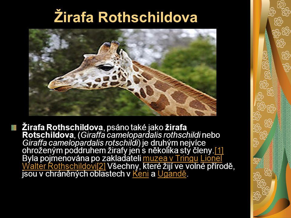 Žirafa Rothschildova Žirafa Rothschildova, psáno také jako žirafa Rotschildova, (Giraffa camelopardalis rothschildi nebo Giraffa camelopardalis rotschildi) je druhým nejvíce ohroženým poddruhem žirafy jen s několika sty členy.[1] Byla pojmenována po zakladateli muzea v Tringu Lionel Walter Rothschildovi[2] Všechny, které žijí ve volné přírodě, jsou v chráněných oblastech v Keni a Ugandě.[1]muzea v TringuLionel Walter Rothschildovi[2]KeniUgandě