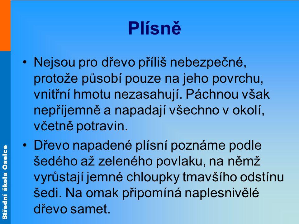 Střední škola Oselce Plísně Nejsou pro dřevo příliš nebezpečné, protože působí pouze na jeho povrchu, vnitřní hmotu nezasahují.