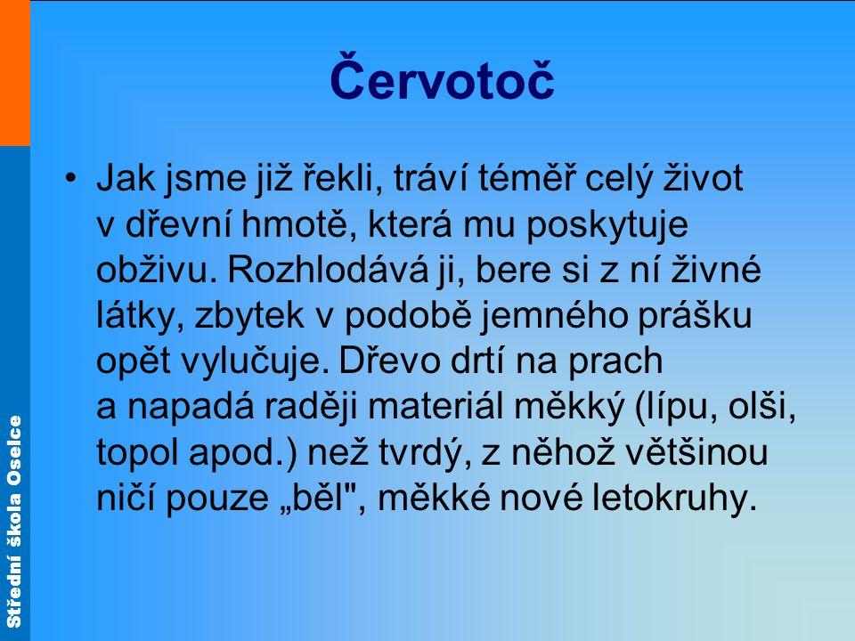 Střední škola Oselce Červotoč Jak jsme již řekli, tráví téměř celý život v dřevní hmotě, která mu poskytuje obživu. Rozhlodává ji, bere si z ní živné