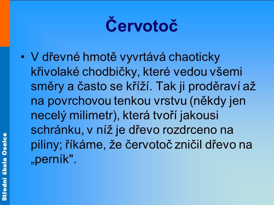 Střední škola Oselce Červotoč V dřevné hmotě vyvrtává chaoticky křivolaké chodbičky, které vedou všemi směry a často se kříží.