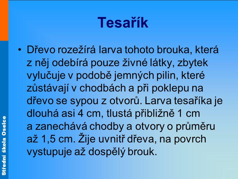 Střední škola Oselce Tesařík Dřevo rozežírá larva tohoto brouka, která z něj odebírá pouze živné látky, zbytek vylučuje v podobě jemných pilin, které zůstávají v chodbách a při poklepu na dřevo se sypou z otvorů.
