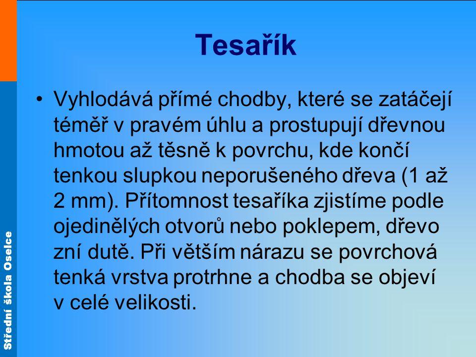 Střední škola Oselce Tesařík Vyhlodává přímé chodby, které se zatáčejí téměř v pravém úhlu a prostupují dřevnou hmotou až těsně k povrchu, kde končí tenkou slupkou neporušeného dřeva (1 až 2 mm).
