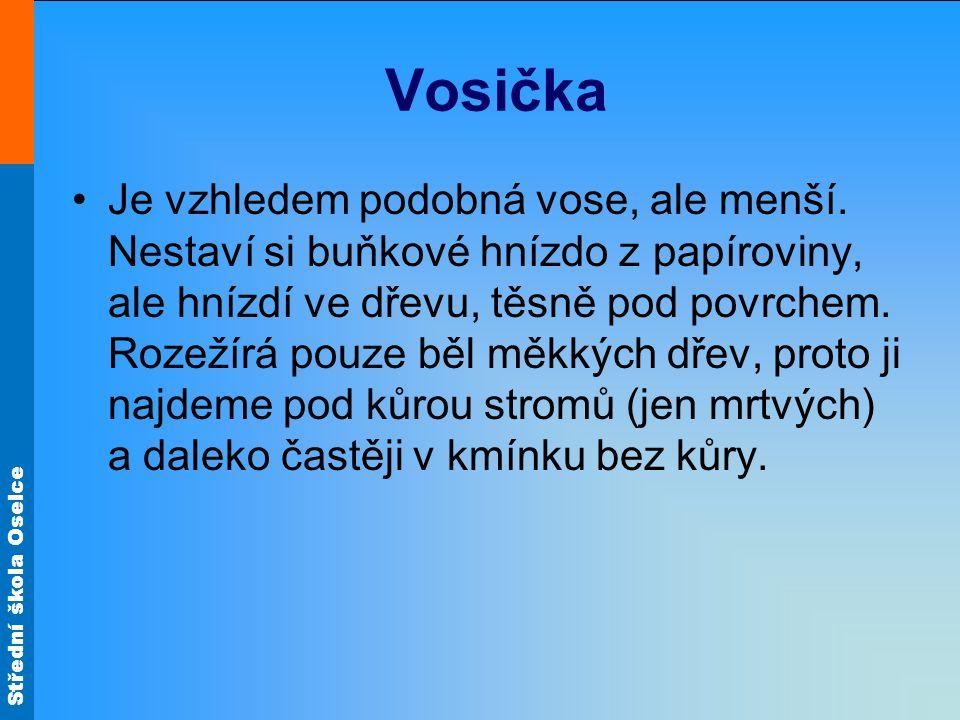 Střední škola Oselce Vosička Je vzhledem podobná vose, ale menší. Nestaví si buňkové hnízdo z papíroviny, ale hnízdí ve dřevu, těsně pod povrchem. Roz
