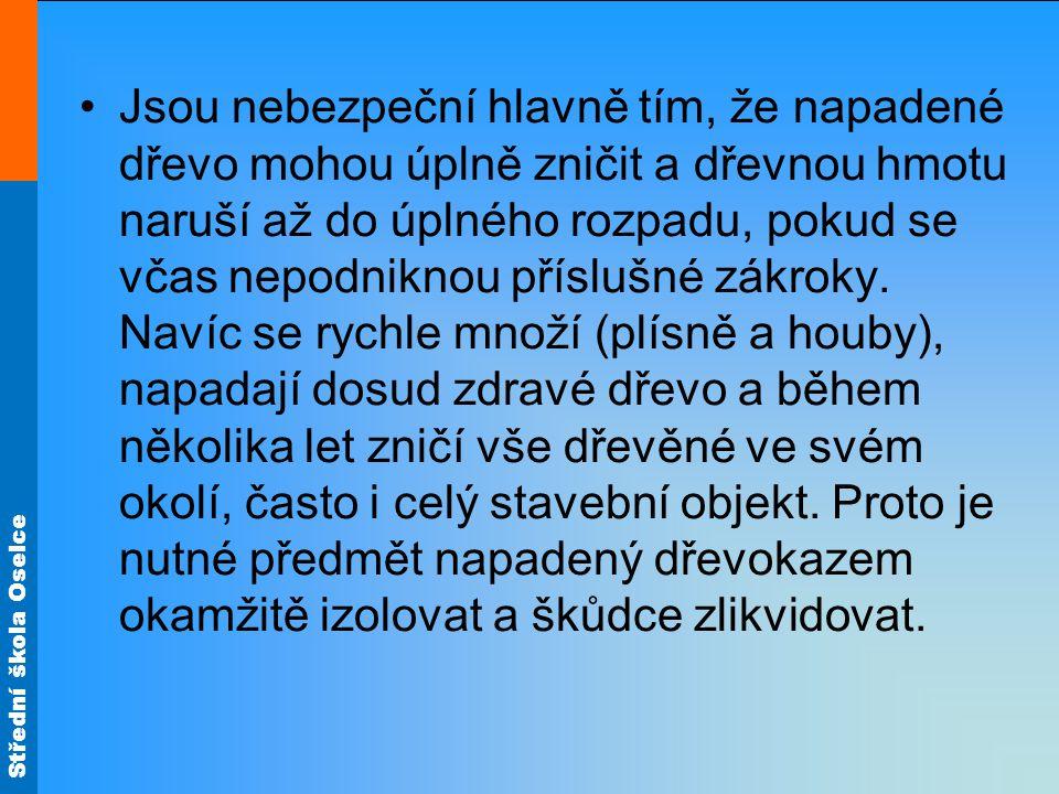 Střední škola Oselce Červotoč Je to brouček dlouhý 5 až 7 mm hnědé barvy s černým podélným čárkováním na tvrdých krovkách.