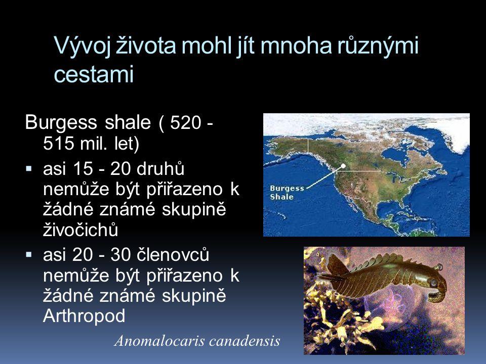 Vývoj života mohl jít mnoha různými cestami Burgess shale ( 520 - 515 mil. let)  asi 15 - 20 druhů nemůže být přiřazeno k žádné známé skupině živočic