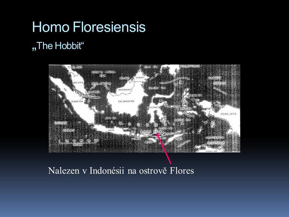 """Homo Floresiensis """" The Hobbit"""" Nalezen v Indonésii na ostrově Flores"""