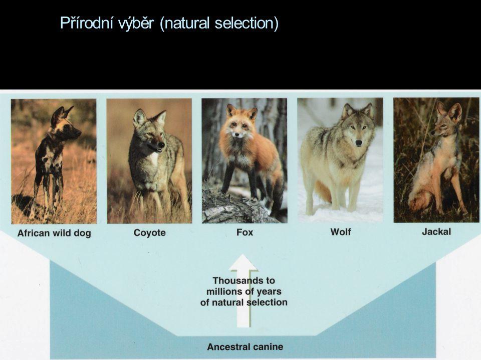 Přírodní výběr (natural selection)