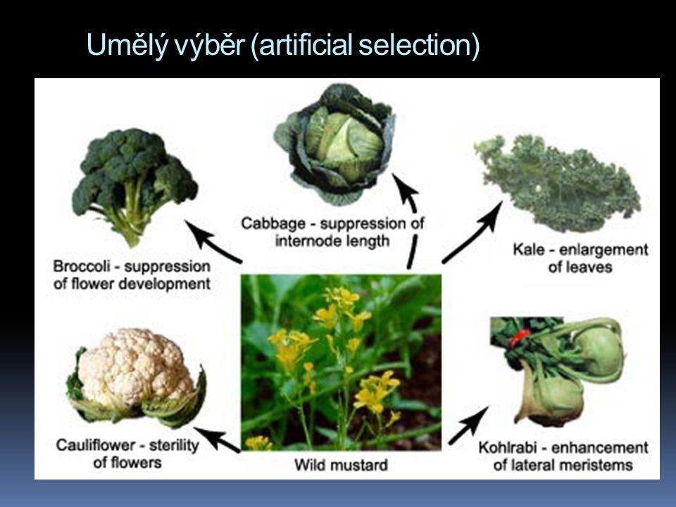 Umělý výběr (artificial selection)