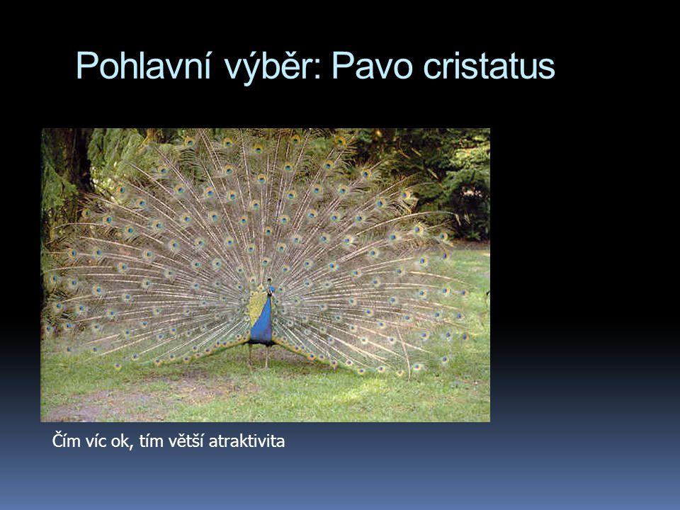 Pohlavní výběr: Pavo cristatus Čím víc ok, tím větší atraktivita