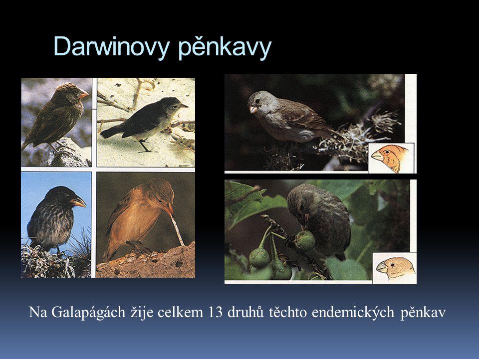 Darwinovy pěnkavy Na Galapágách žije celkem 13 druhů těchto endemických pěnkav