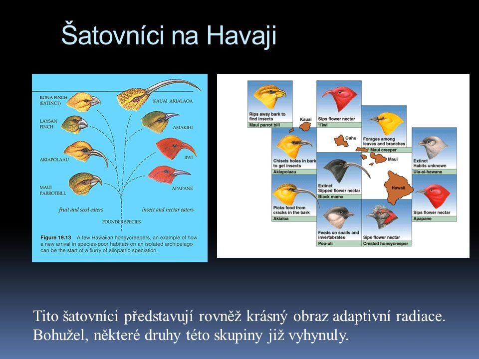 Šatovníci na Havaji Tito šatovníci představují rovněž krásný obraz adaptivní radiace. Bohužel, některé druhy této skupiny již vyhynuly.