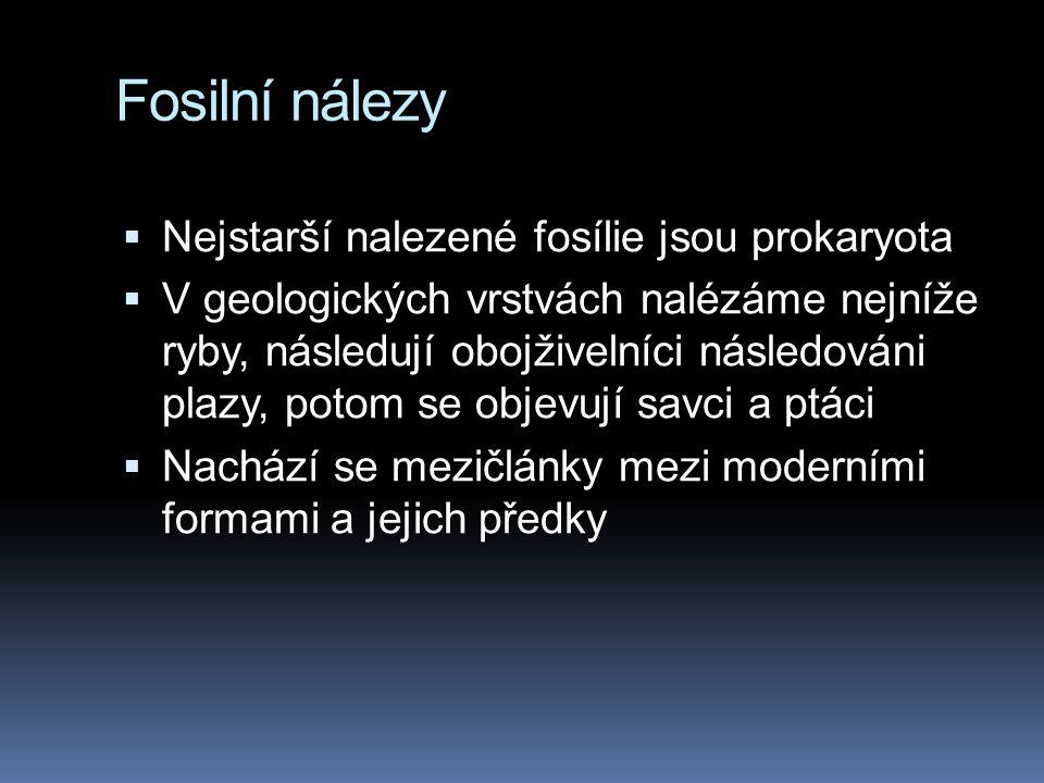 Fosilní nálezy  Nejstarší nalezené fosílie jsou prokaryota  V geologických vrstvách nalézáme nejníže ryby, následují obojživelníci následováni plazy