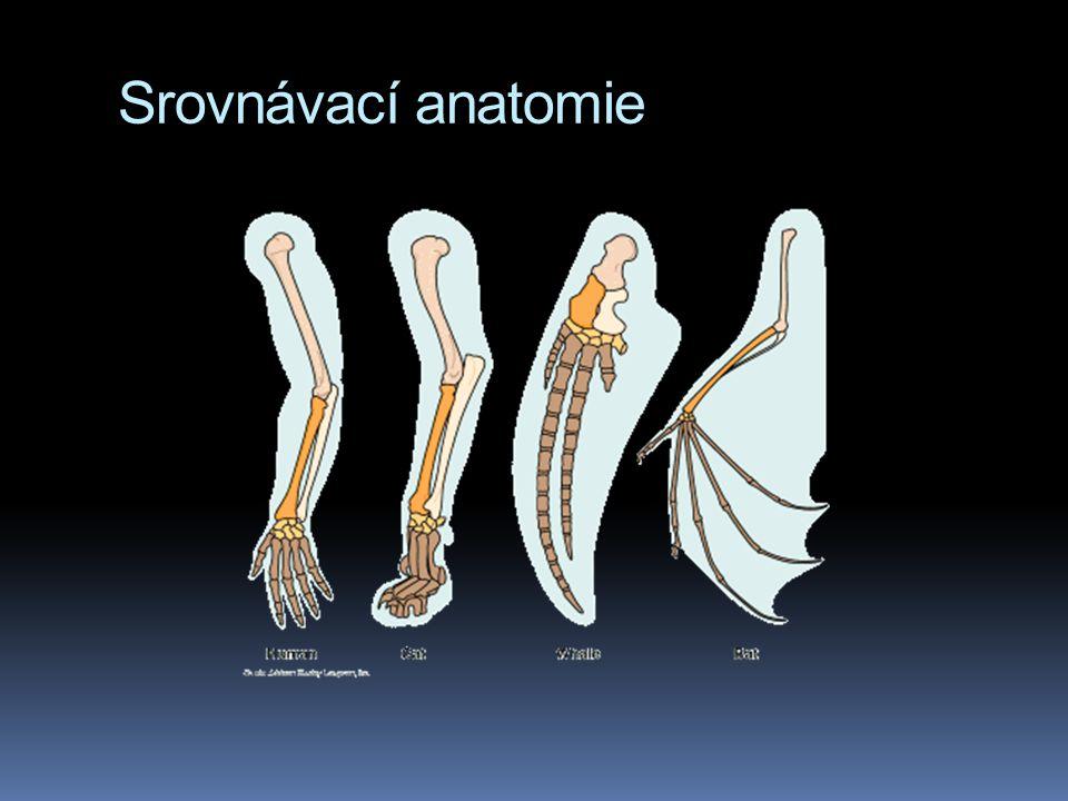 Srovnávací anatomie