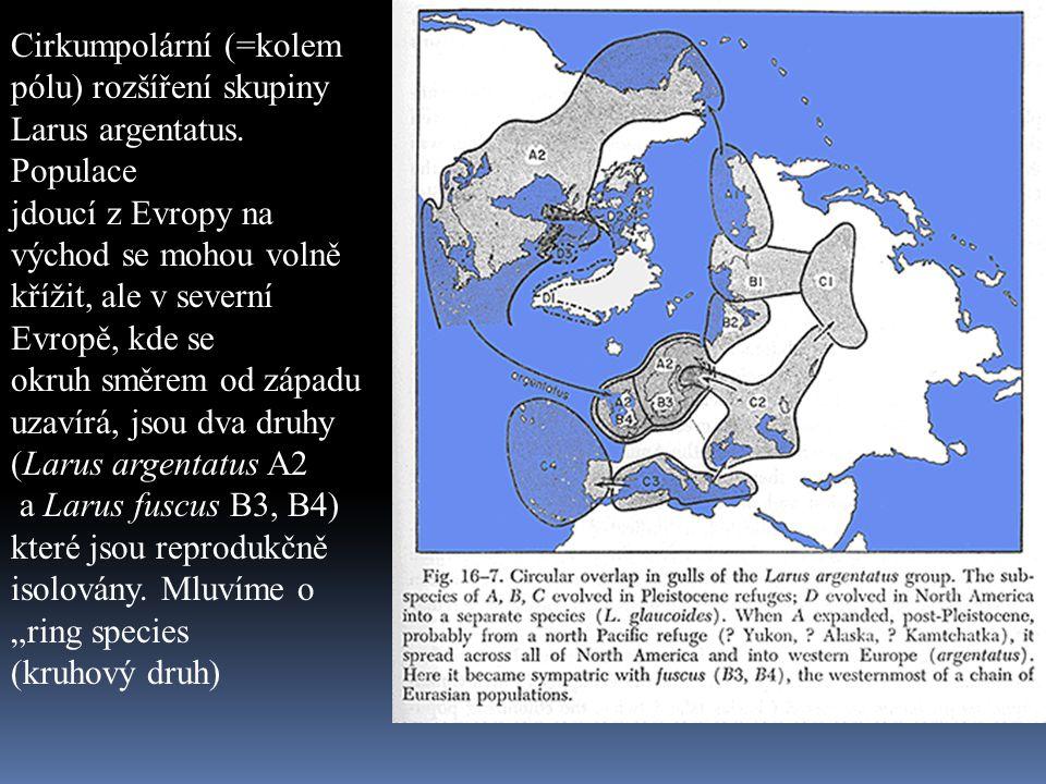 Cirkumpolární (=kolem pólu) rozšíření skupiny Larus argentatus. Populace jdoucí z Evropy na východ se mohou volně křížit, ale v severní Evropě, kde se