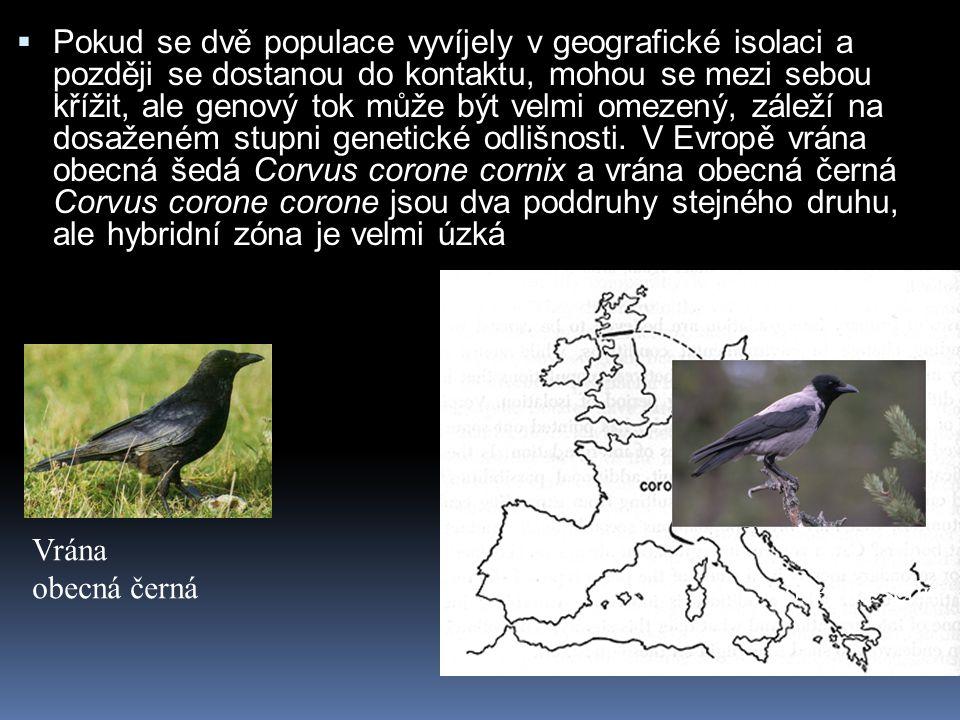  Pokud se dvě populace vyvíjely v geografické isolaci a později se dostanou do kontaktu, mohou se mezi sebou křížit, ale genový tok může být velmi om