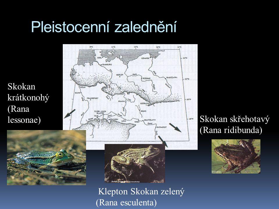 Pleistocenní zalednění Skokan krátkonohý (Rana lessonae) Skokan skřehotavý (Rana ridibunda) Klepton Skokan zelený (Rana esculenta)
