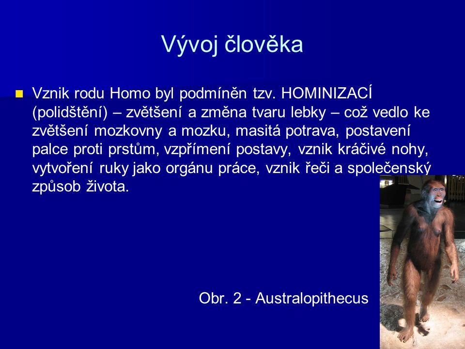 Vývoj člověka Vznik rodu Homo byl podmíněn tzv. HOMINIZACÍ (polidštění) – zvětšení a změna tvaru lebky – což vedlo ke zvětšení mozkovny a mozku, masit