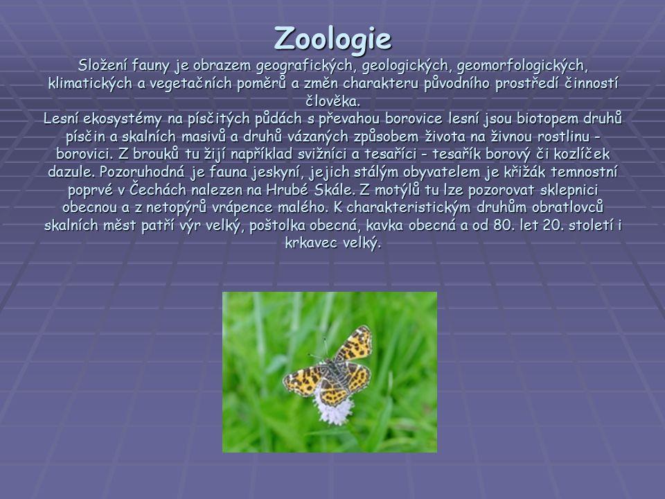 Zoologie Složení fauny je obrazem geografických, geologických, geomorfologických, klimatických a vegetačních poměrů a změn charakteru původního prostř