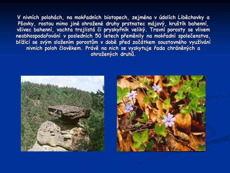 V nivních polohách, na mokřadních biotopech, zejména v údolích Liběchovky a Pšovky, rostou mimo jiné ohrožené druhy prstnatec májový, kruštík bahenní,