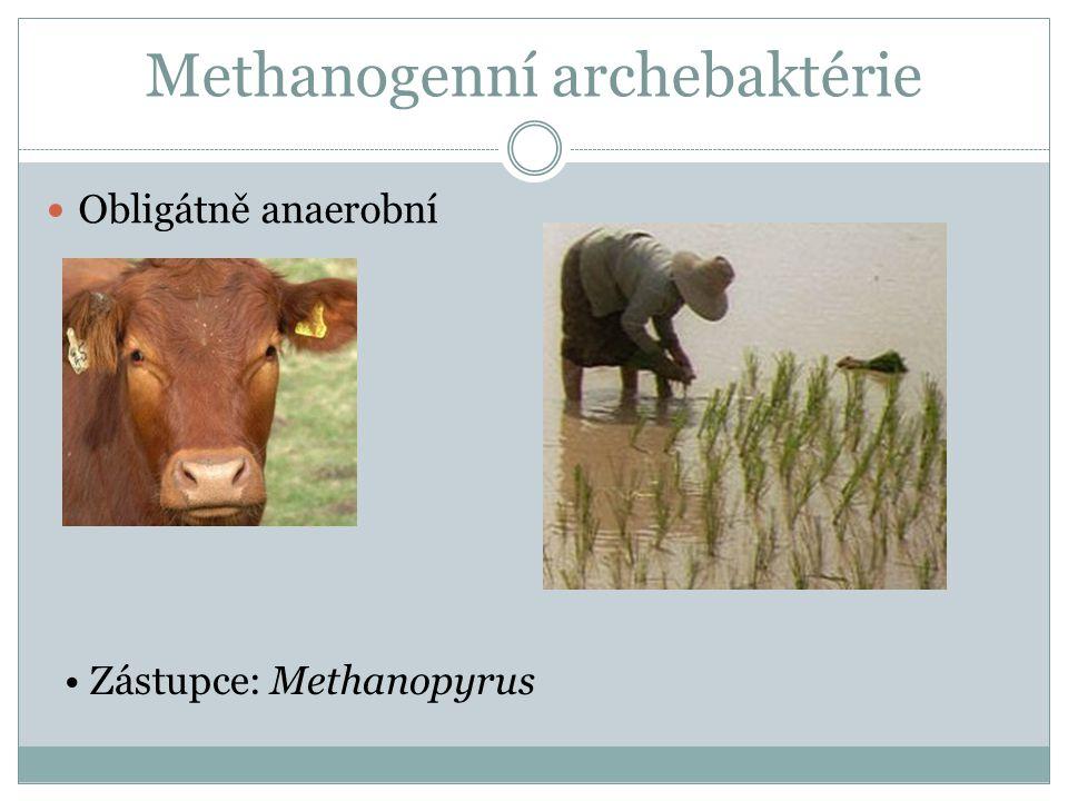 Methanogenní archebaktérie Obligátně anaerobní Zástupce: Methanopyrus