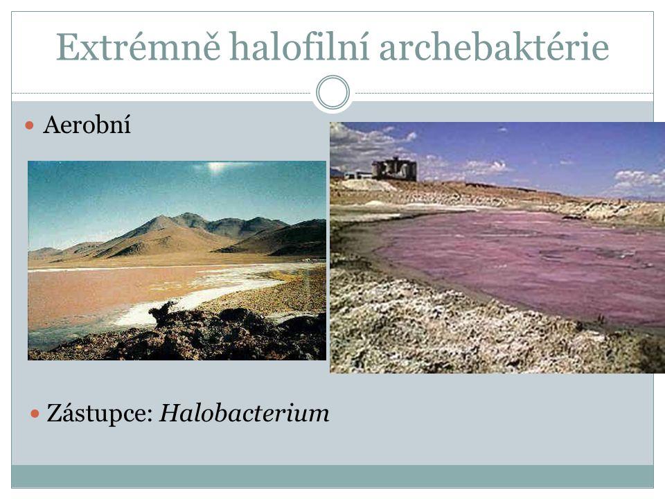 Extrémně halofilní archebaktérie Aerobní Zástupce: Halobacterium