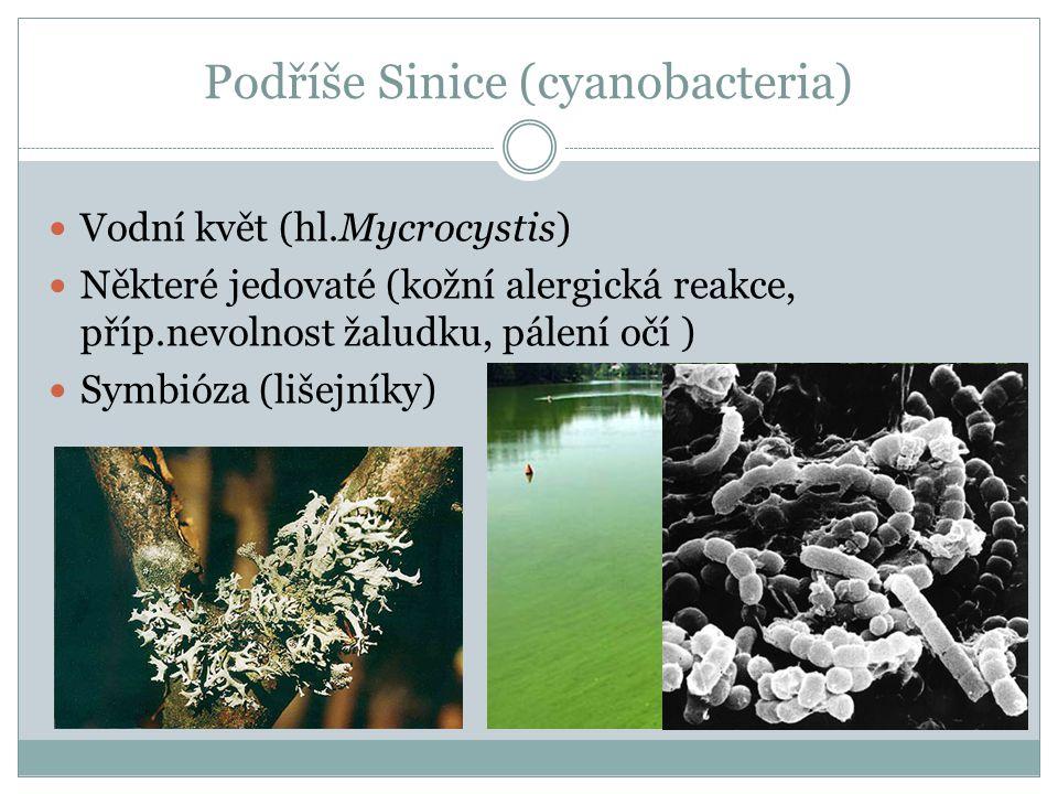 Fotosyntéza Fixace vzdušného N 2 (heterocysty) Výrazný geologický činitel- tvorba travertinu Podříše Sinice (cyanobacteria)