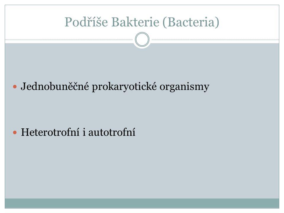 Podříše Prochlorophyta Pláštěnec Didemnum molle- na povrchu prochlorophyta