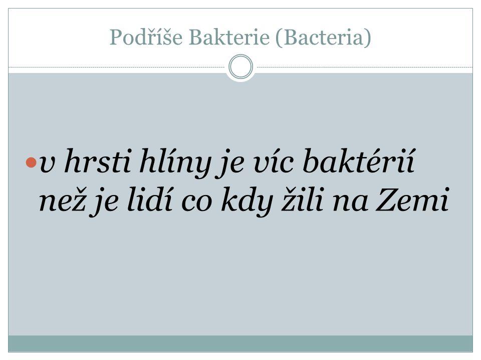 Podříše Bakterie (Bacteria) Jednobuněčné prokaryotické organismy Heterotrofní i autotrofní