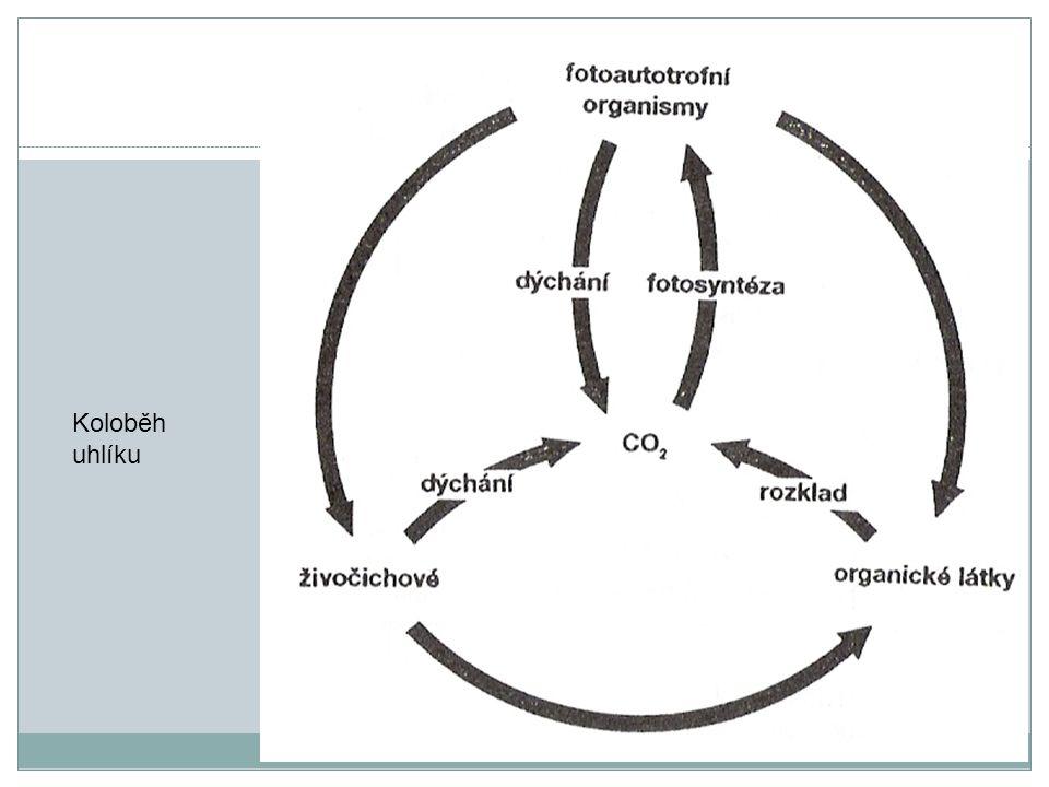 Koloběh uhlíku