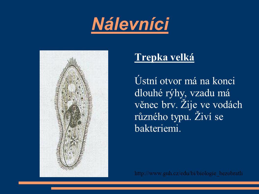 Nálevníci Trepka velká Ústní otvor má na konci dlouhé rýhy, vzadu má věnec brv. Žije ve vodách různého typu. Živí se bakteriemi. http://www.guh.cz/edu