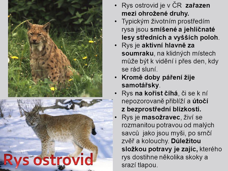 Rys ostrovid je v ČR zařazen mezi ohrožené druhy. Typickým životním prostředím rysa jsou smíšené a jehličnaté lesy středních a vyšších poloh. Rys je a