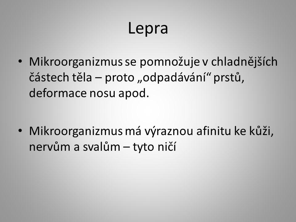 """Lepra Mikroorganizmus se pomnožuje v chladnějších částech těla – proto """"odpadávání"""" prstů, deformace nosu apod. Mikroorganizmus má výraznou afinitu ke"""