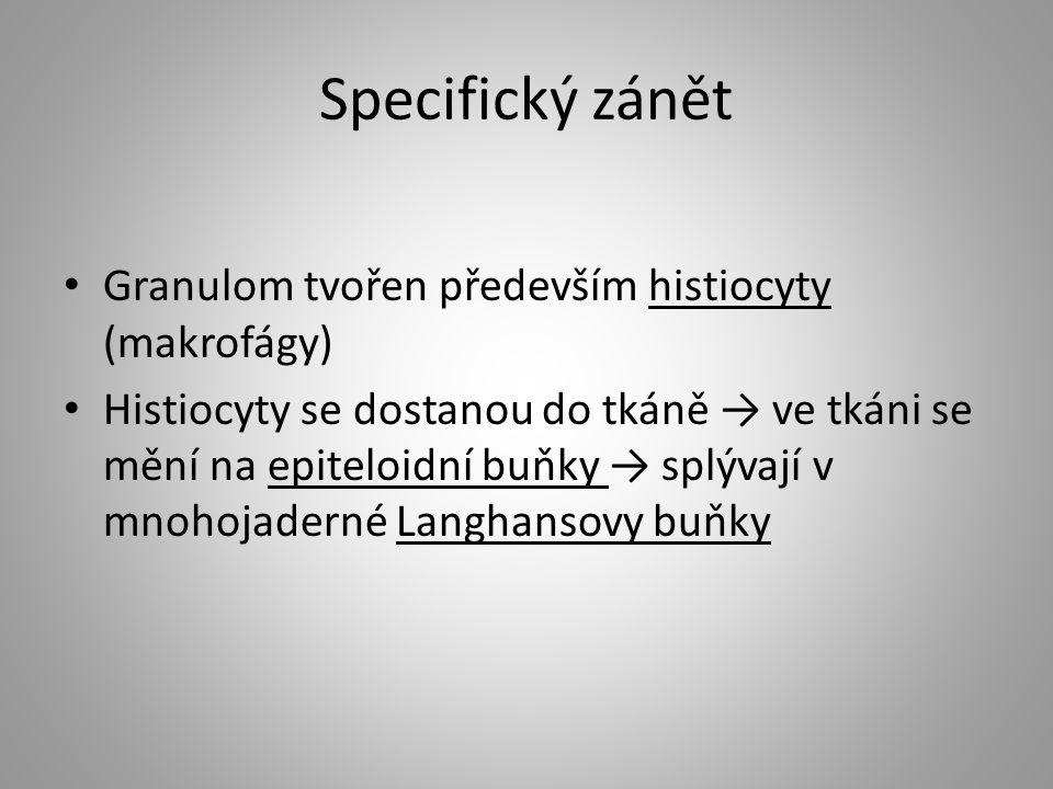 Specifický zánět Granulom tvořen především histiocyty (makrofágy) Histiocyty se dostanou do tkáně → ve tkáni se mění na epiteloidní buňky → splývají v