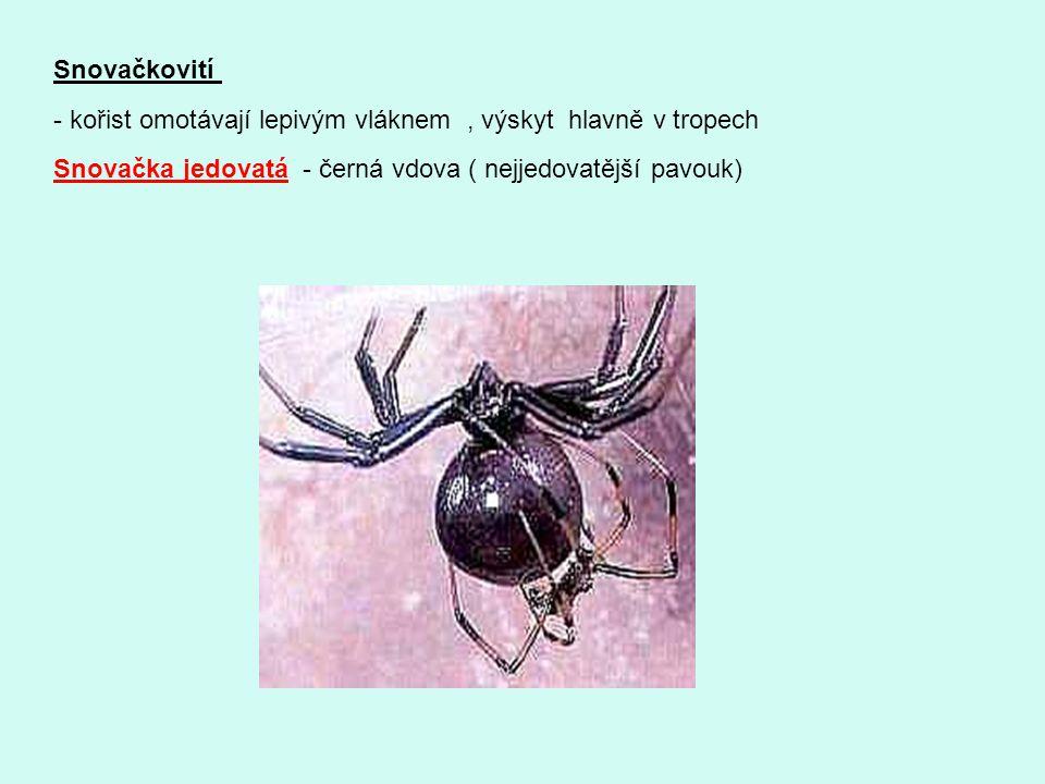 Snovačkovití - kořist omotávají lepivým vláknem, výskyt hlavně v tropech Snovačka jedovatá - černá vdova ( nejjedovatější pavouk)