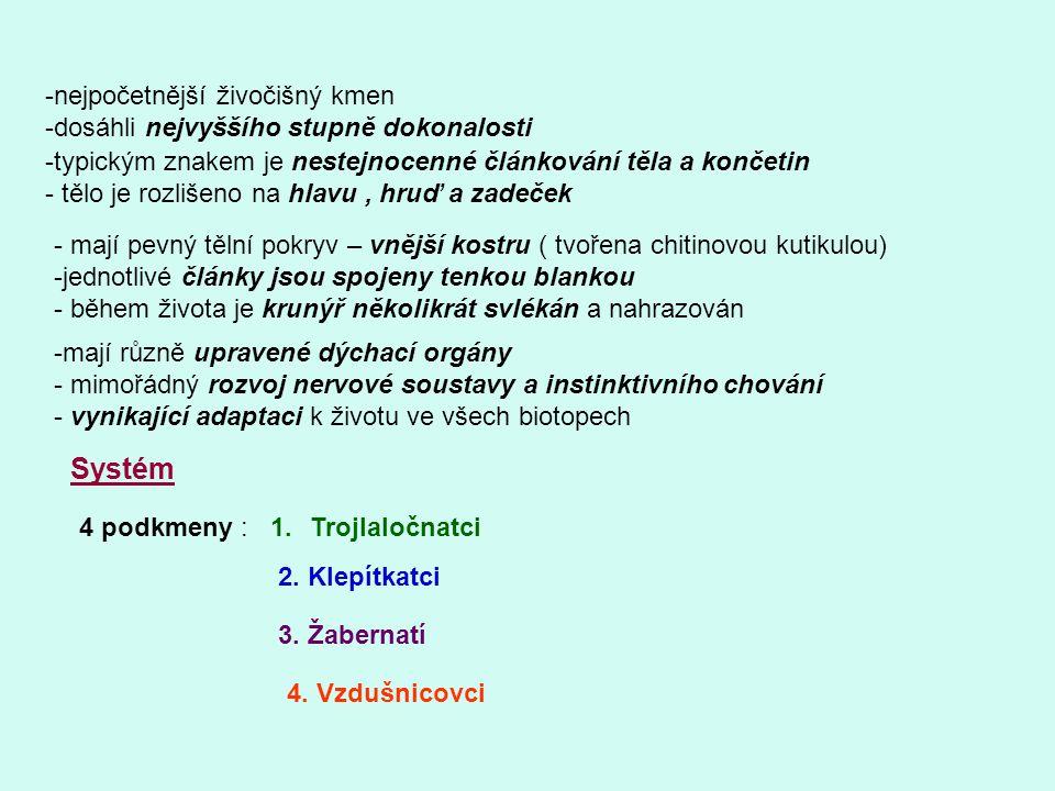 Podkmen: Trojlaločnatci -rozšířeni v prvohorních mořích Stavba těla -všechny končetiny stejné - první pár přeměněn na tykadla - tělo rozlišeno na hlavu, hruď a zadeček - hřbetní strana rozdělena na tři podélné laloky - tělní články stejné – každý nese dvouvětevné končetiny -vnitřní větev = funkce pohybová - vnější větev = funkce dýchací - jediná třída: Trilobiti Výchozí Výchozí