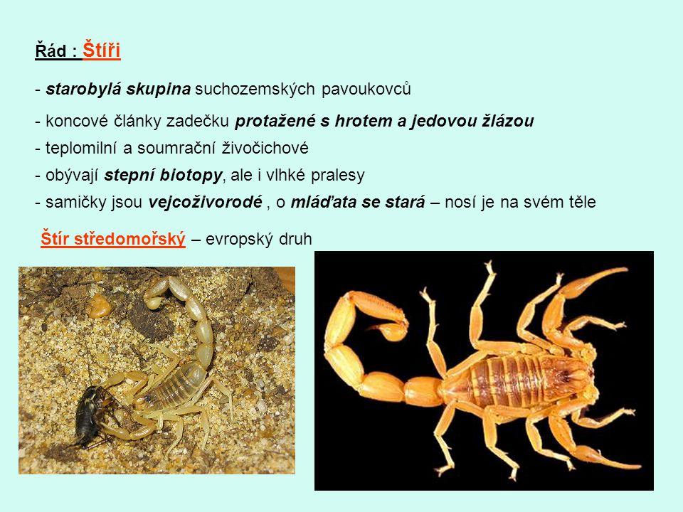 Řád : Štíři - starobylá skupina suchozemských pavoukovců - koncové články zadečku protažené s hrotem a jedovou žlázou - teplomilní a soumrační živočic