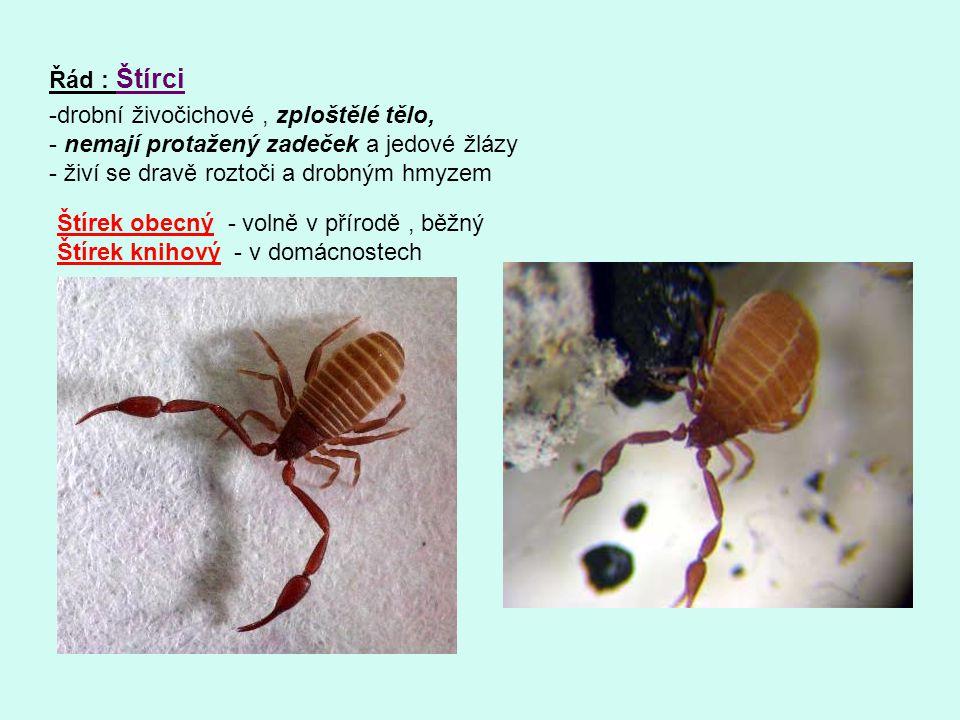 Řád : Štírci -drobní živočichové, zploštělé tělo, - nemají protažený zadeček a jedové žlázy - živí se dravě roztoči a drobným hmyzem Štírek obecný - v