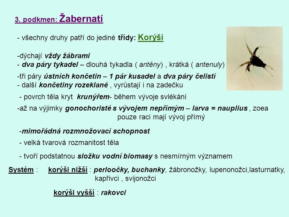 3. podkmen: Žabernatí - všechny druhy patří do jediné třídy: Korýši -dýchají vždy žábrami - dva páry tykadel – dlouhá tykadla ( antény), krátká ( ante