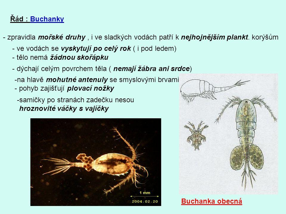 Řád : Buchanky - zpravidla mořské druhy, i ve sladkých vodách patří k nejhojnějším plankt. korýšům - ve vodách se vyskytují po celý rok ( i pod ledem)